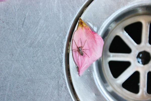 spider-on-petal.jpg